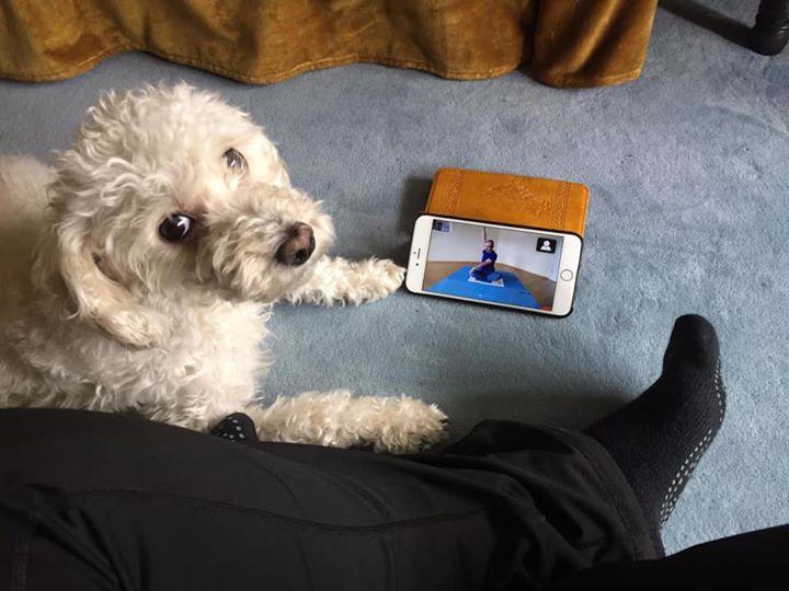 Yoga online im Livestream